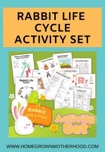 Rabbit Life Cycle Activity